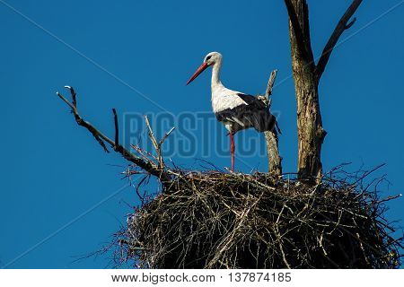 Single stork in the nest stands on one leg