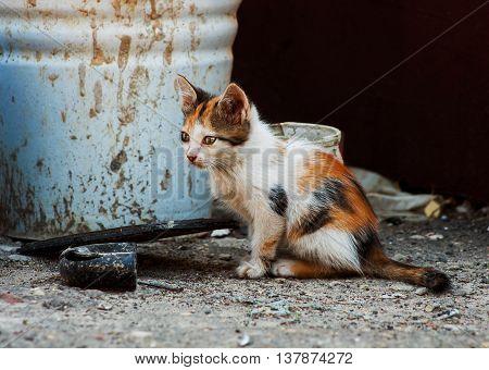 Little sad stray kitten sitting on the street