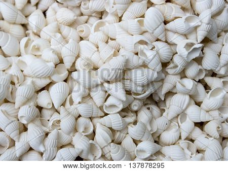seashells as a background on the counter market.