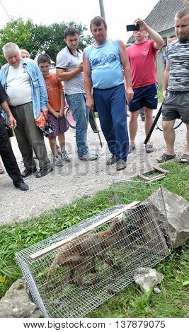 Shmankivchyky - Ukraine - 29 June 2016. The villagers caught an unknown animal which is popularly called Chupacabra. This beast killed many  rabbits and poultry.
