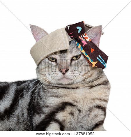 American Shorthair Cat With The Tie On The Head