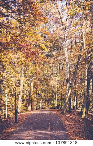 Lonely path in park. Woodland in fall depiction. Nature vegetation season concept.