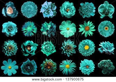 Collage Of Natural And Surreal Turquoise Flowers 24 In 1: Peony, Dahlia, Primula, Aster, Daisy, Rose