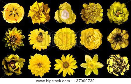 Collage Of Natural And Surreal Yellow Flowers 15 In 1: Peony, Dahlia, Primula, Aster, Daisy, Rose, G