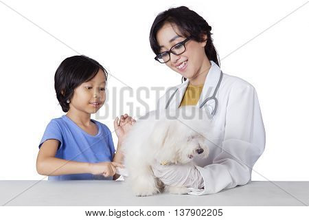 Portrait of little girl carrying a maltese dog to the veterinarian isolated on white background