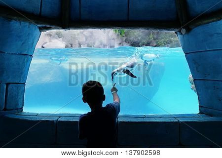Silhouette of little boy watching penguin swimming inside aquarium