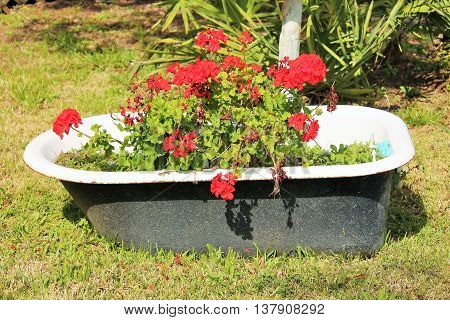 Large tub used outdoors as a flower planter.