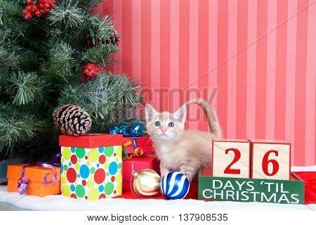 Orange tabby kitten coming out of a stocking next to a christmas tree with colorful presents and holiday balls of ornaments next to Days until Christmas light beech wood blocks 26 days til