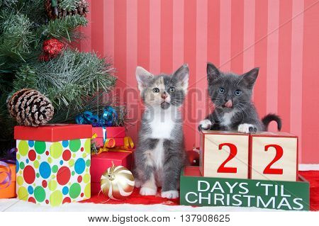 Calico and gray and white kittens next to christmas tree with colorful presents and holiday balls of ornaments next to Days until Christmas light beech wood blocks 22 days til