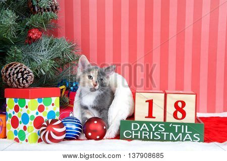 Calico kitten coming out of a stocking next to a christmas tree with colorful presents and holiday balls of ornaments next to Days until Christmas light beech wood blocks 18 days til Christmas