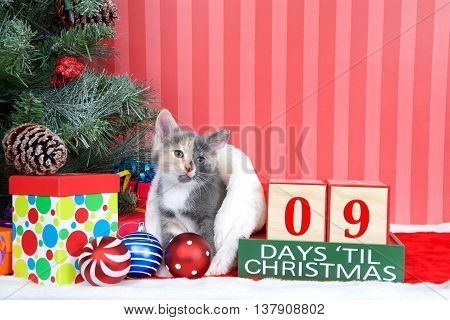 Calico kitten coming out of a stocking next to a christmas tree with colorful presents and holiday balls of ornaments next to Days until Christmas light beech wood blocks 09 days til Christmas
