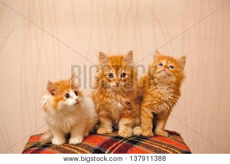 Three nice ginger kittens sitting on plaid. Pets. Funny animals.