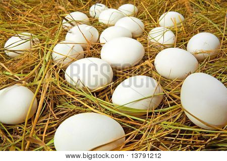 Easter background of many eggs lying in dry straw