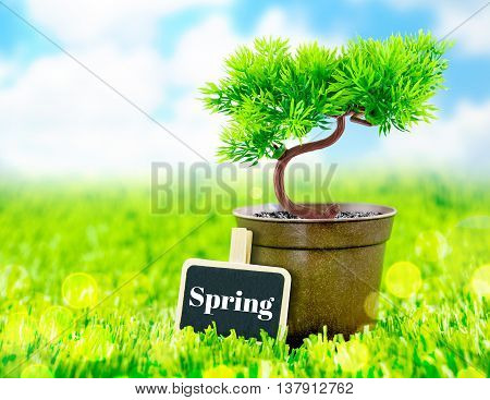 Flowerpot And Spring Word On Blackboard On Green Grass With Blue Sky,spring Season