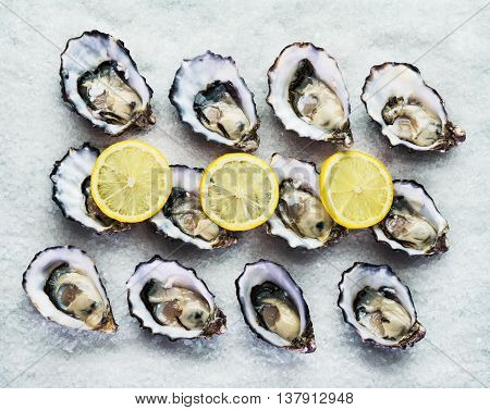 Dozen fresh oysters on a sea salt with lemon. Top view