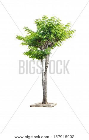 Isolated Single Tree With Green Leaf Bush