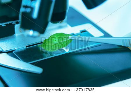 Scientist Observed Green Leaf In Laboratory Glass,observation Of A Green Leaf With A Microscope,scin