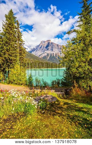 Solar cool morning. Blossoming glade in the forest. The Emerald Lake, Yoho National Park, Rocky Mountains, Canada