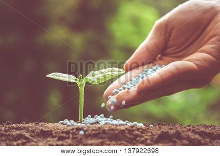 hand of a farmer giving fertilizer to young green plants / nurturing baby plant with chemical fertilizer