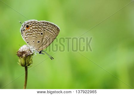 A Butterfly over flower with green background