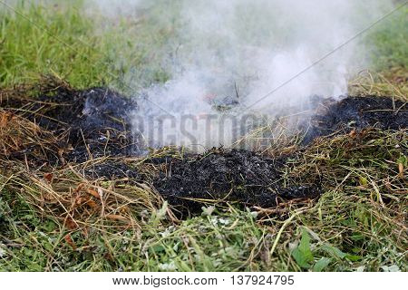 Burned dry grass closeup. A charred piece of grass on a background of fresh green shoots.