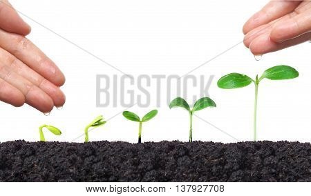 Agriculture. Hand of a farmer nurturing young baby plants growing in germination sequence on fertile soil with natural green background