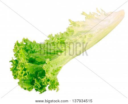 Salad leaf side view. Fresh lettuce one leaf isolated on white background closeup. Green vegetable lettuce side view