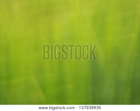 Defocused Flowers And Plants In Barley Field In Moved Background.