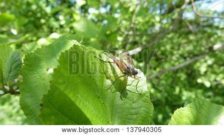 Yellowish brown fly on green leaf plants