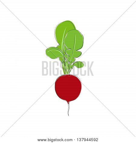 Radish with Tops Standing, Vegetable Radish Isolated on White Background, Vector Illustration