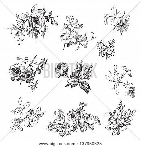 Meadow flower and leaf set vector isolated on white floral doodle vintage element decorative oriental design. Invitation wedding valentine day greeting card collection. Botanical rose daisy bloom