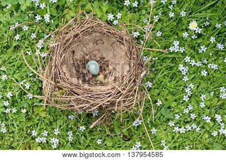 Old nest with one blue egg on a meadow