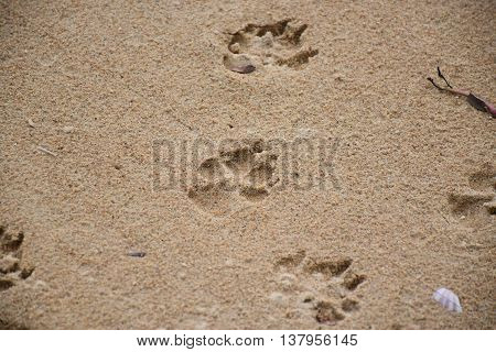 pothole of Dog footprints in the sand