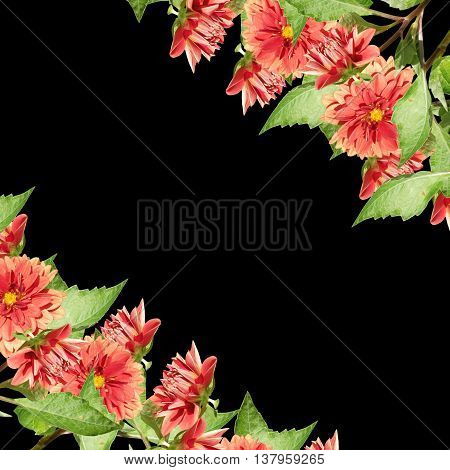 Delicate floral background colors of red dahlia