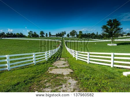 The Path Between Fields on a horse farm in rural Kentucky