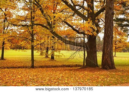 colorful autumn trees fallen leaves in park