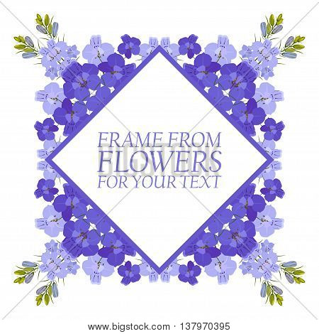Frame of flowers for text. Violet flowers Delphinium. On white background.