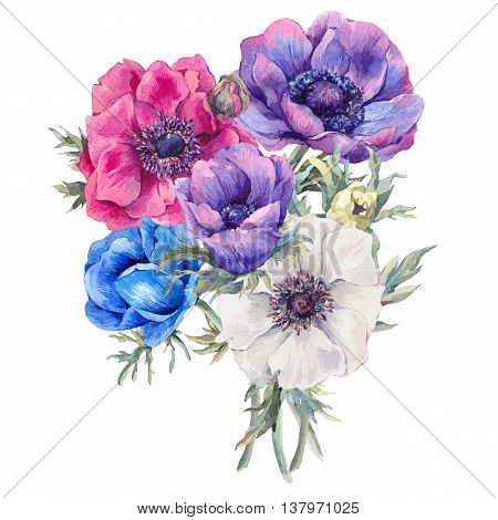 Summer watercolor vintage floral greeting card with blooming anemones garden flowers, botanical natural anemone Illustration isolated on white
