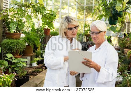 Female coworkers looking in clipboard while standing amidst plants at greenhouse