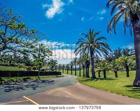 Palm trees line the road along this golf course in Bermuda.