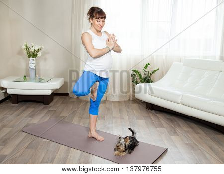 Healthy lifestyle concept. Pregnancy Yoga and Fitness. Young pregnant yoga woman working out with her pet dog in living room interior. Pregnant smiling model doing yoga tree pose at home