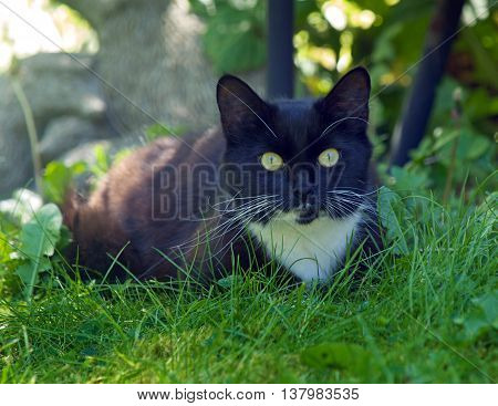 Black and white pet  cat in a garden