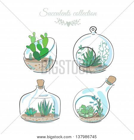 set of four floral compositions with succulents and cactuses in decorative glass vases, vector illustration