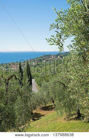 Mediterranean Landscape With Olive Groves At The Lake Shore Garda Lake, Gargnano Village