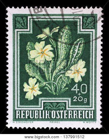 ZAGREB, CROATIA - SEPTEMBER 09: stamp printed by Austria, shows Primrose (Primula vulgaris), circa 1948, on September 09, 2014, Zagreb, Croatia