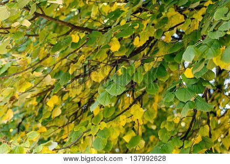 tree dry leaves foliage nature landscape nature