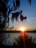 pic of bayou  - sunset on Bayou Des Allemands with trees and reeds back lit - JPG