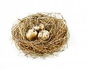image of bird-nest  - egg in a real nest - JPG