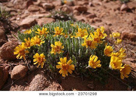 Flowers in Rock Field