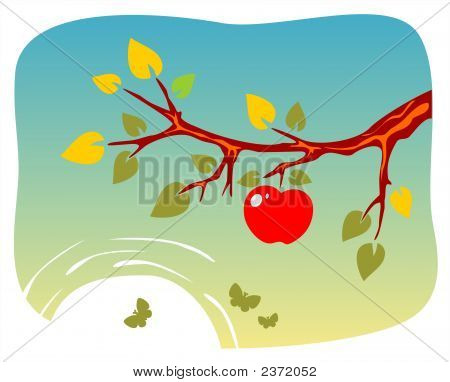 Branch Of Apple-Tree